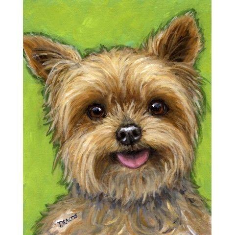 Yorkshire Terrier Dog Art 8x10 Print of Original by DottieDracos, $12.00