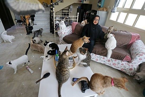 Youm7 On Instagram سيدة إماراتية تحول منزلها إلى مأوى للقطط الضالة وتنفق 15 ألف درهم شهريا Youm7 اليوم السابع Toddler Bed Decor Home Decor