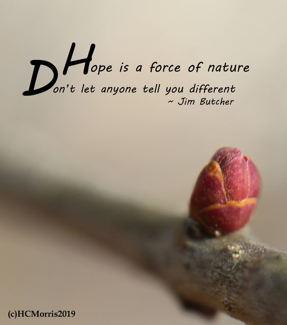 close up of purple lilac bud with Jim Butcher quote
