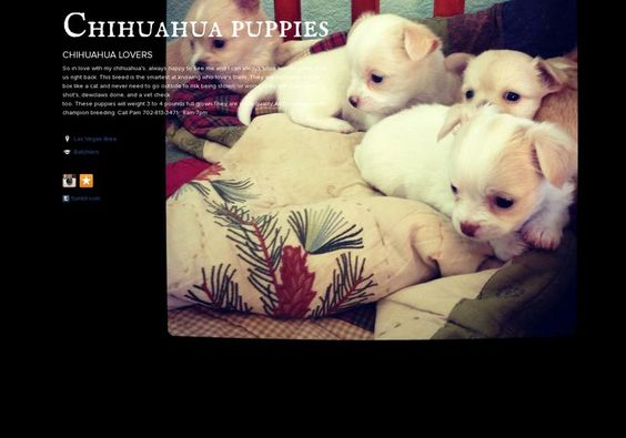 Chihuahua puppies' page on about.me – http://about.me/chihuahuapuppies