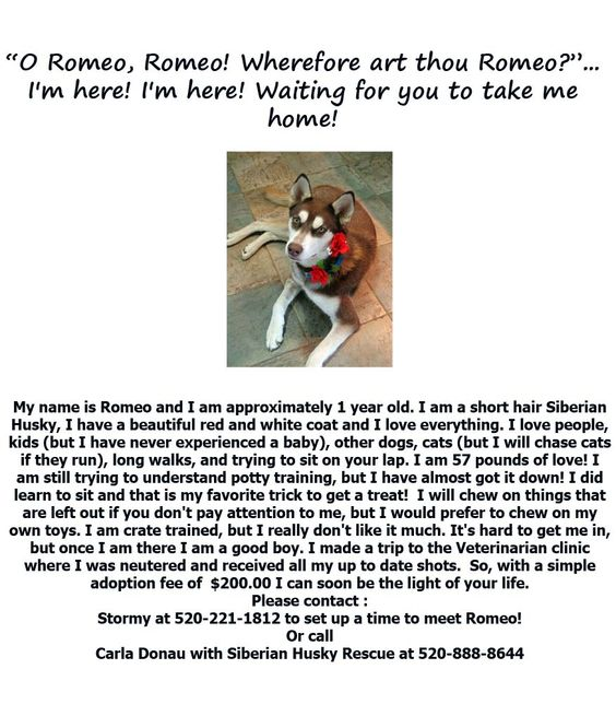 Romeo is up for adoption! Please look and share to find him a forever home!