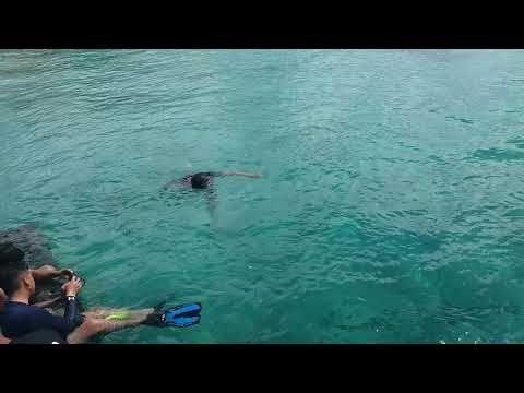 Pesona Keindahan Pulau Derawan Cuti Lebaran Youtube Pesona Keindahan Laut Yg Ada Dipulau Derawan Berau Pulau Derawan Tanjungbatu Bera Pulau Lautan Alam
