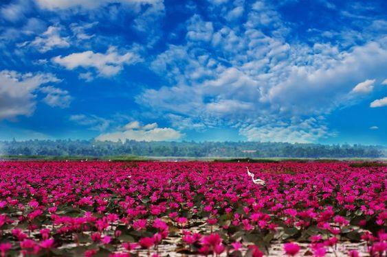 タイの東北部のウドーンターニー県にある湖です。