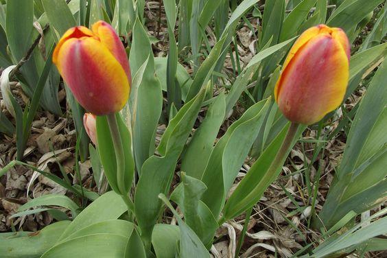 Springtime at LKH Farm!