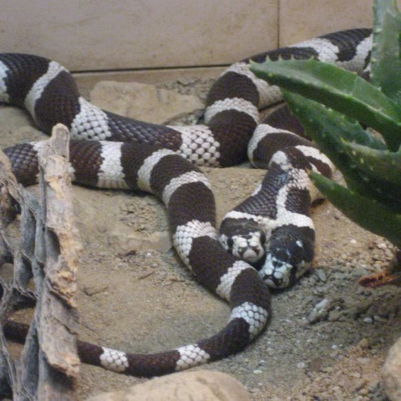 Two-headed Snake at the San Diego Zoo | A Little Bit of ...