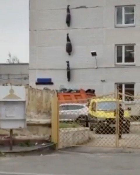 فيديو متداول حاليا نقل جثث موتى فايروس كورونا من أحد المستشفيات الروسية روسيا كورونا كورونا فايروس Election