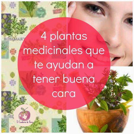 El Cuaderno de Flores-farmacia, nutrición y vida sana: 4 plantas medicinales que te ayudan a tener buena ...