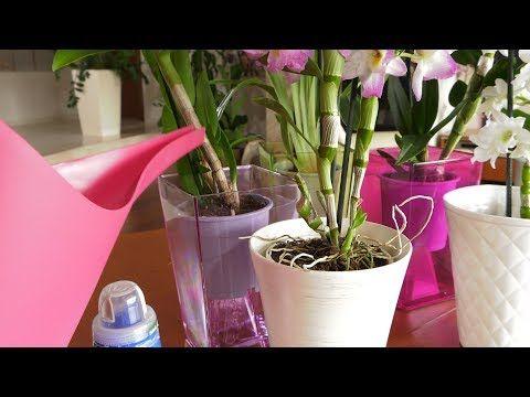 Sospecial Youtube Make It Yourself Spore Planter Pots