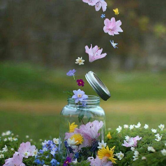 خلفيات ورد ملونة 2020 اجمل صور ورد 2021 فوتوجرافر Flower Aesthetic Beautiful Flowers Wallpapers Flower Wallpaper