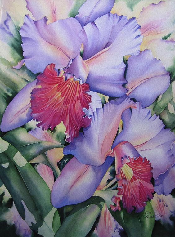 Fotografias Bellas, Acuarelas Flores, Relieves, Orquideas, Blanca, Porcelana, Acuarelas De Orquídeas, Iris De La Acuarela, Sujetos Acuarela