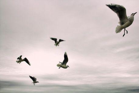 '...fly...' von Dörte Kleyling bei artflakes.com als Poster oder Kunstdruck $15.68