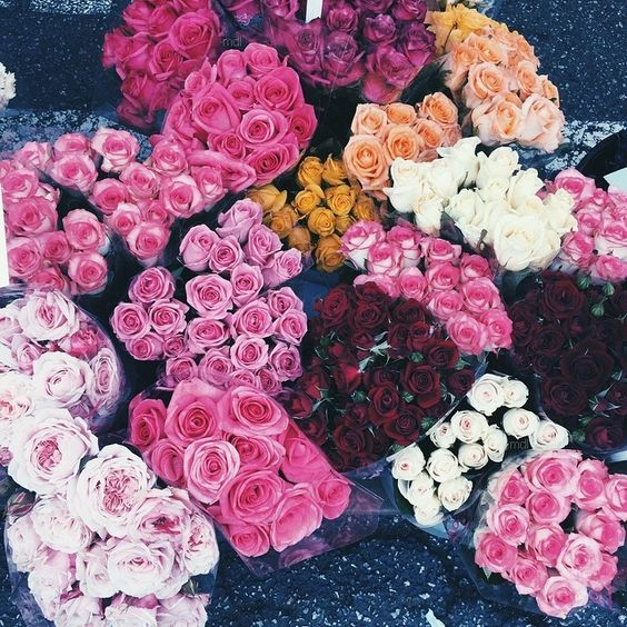 Flores,roses