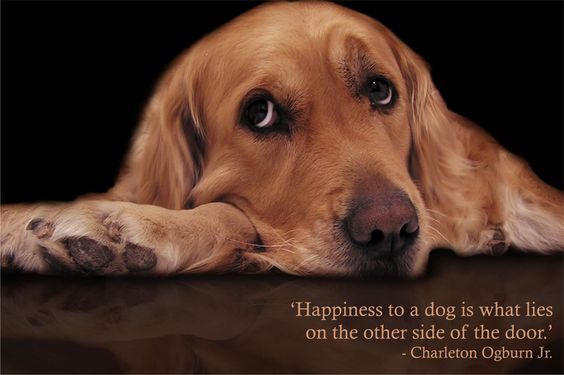 """Happiness to a dog is what lies on the other side of the door"" #dogs #happiness #quotes"