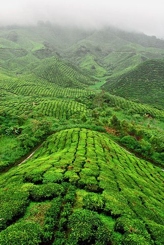 Les forêts de Pahang s'étendent à perte de vue #Malaisie