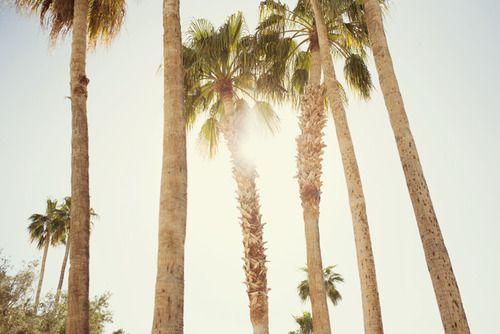 : California Palm Trees, California Dreamin, Favorite Places Spaces, Palmtrees Nature, Beautiful Places, Sun Palmtrees, Trees Sunshine, California Sunshine