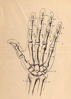 El Taller De Miguel Angel Como Dibujar Manos Como Dibujar Manos Anatomia Del Esqueleto Como Dibujar