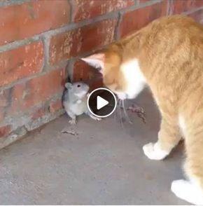 esse ratinho esta mim incomodando