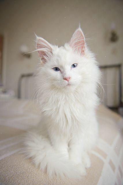 Pin On Kitty Cat Cuteness