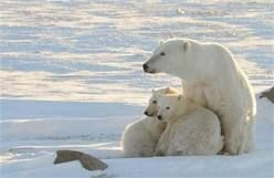 the arctic north