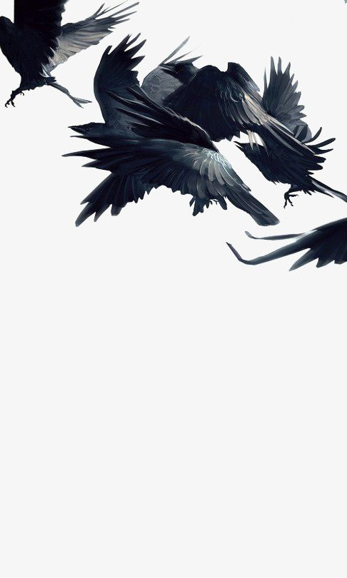 Flying Crow Png And Clipart Crow Photography Crow Art Crow