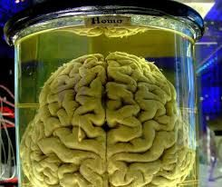「cellular automaton」の画像検索結果