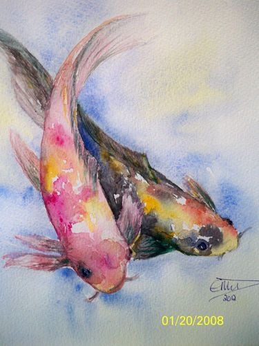 Colourful coy carp fish original signed watercolour by for The coy carp