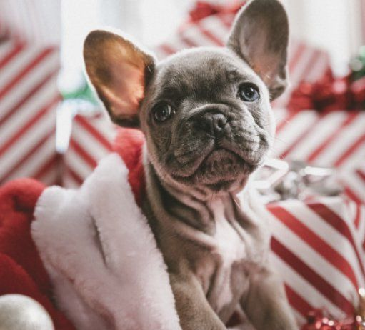 Win A Big Gift Card Package Worth 1 850 00 Sign Up For Newsletter To Enter Complete The Form Submit And Y Holiday Dog Toys Dog Holiday Dog Christmas Gifts