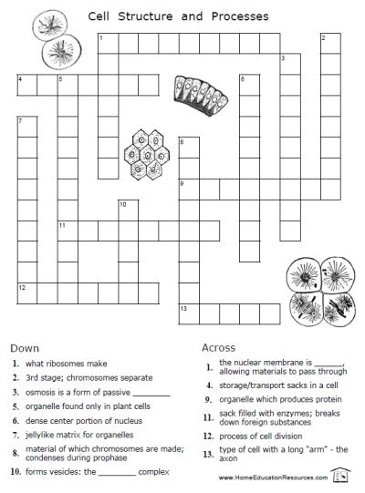Printables Cell Structure Worksheet cell structure biology and high schools on pinterest free printable cells crossword puzzle worksheet cytology science fun