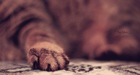 Paws by Nina Podobnik on 500px