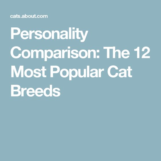 Personality Comparison: The 12 Most Popular Cat Breeds