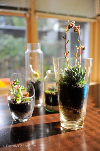 how to make a terrarium pinterest