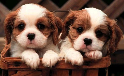 I  want a puppy more than anything in the world! How could anyone look at this picture and not want one?