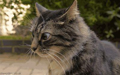 coisas-sobre-gato-1