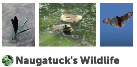 Naugatuck's Wild Side!