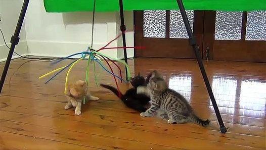Colour Cats Tree Branch Best Funny Viral Videos http://ift.tt/1NRCkdb
