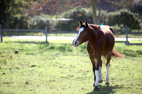# horses #noordhoek #cape #town #pet #photography