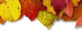 Liście, Kolorowy, Kolor, Żółty, Czerwony
