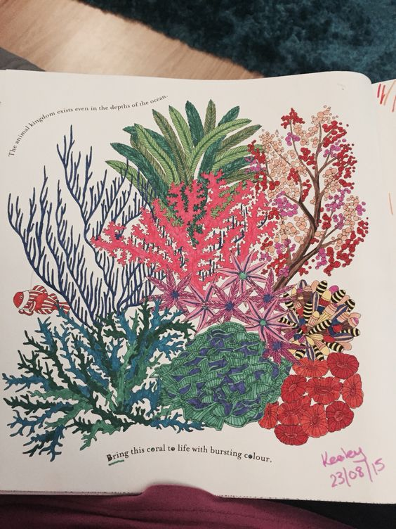 Coral Reef From Millie Marottas Animal Kingdom Colouring