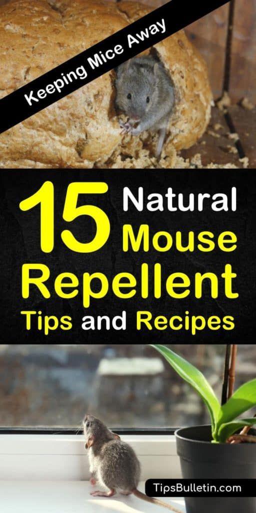 15 Brilliant Diy Mouse Repellents Mice Repellent Natural Repellent Diy Mice Repellent