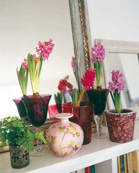 Plantas en tonos rosas