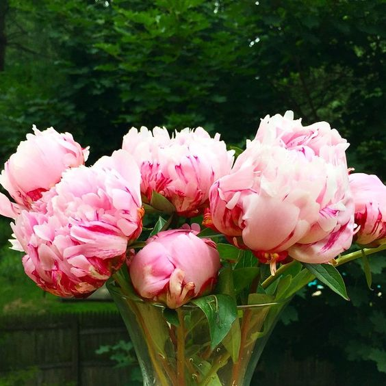 Peonies....to all of my friends in #LGBT community, a remarkable day in history! Congrats! #lovewins #love