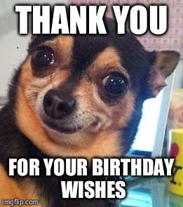 Funny Happy Birthday Meme To Say Thank You For Your Birthday Wishes On Image Of Funny Dog Funny Puns Jokes Funny Puns Memes