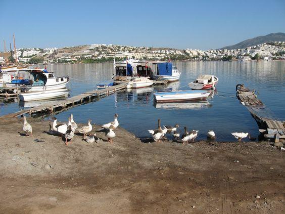 denizde kazlar - Bodrum, Mugla