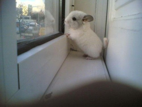 So cute but unfortunately mine wouldn't be looking out the window, he would be chewing on every inch of that wood!!
