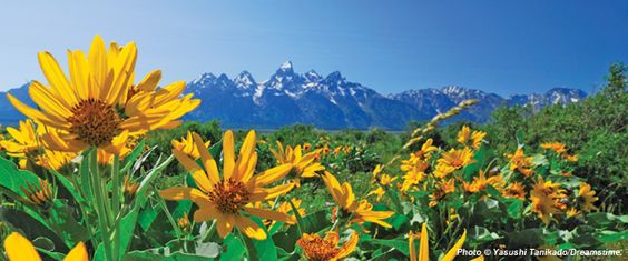"""Grand Teton National Park has several parcels of privately held land within its boundaries (""""inholdings"""") that are under threat of development. Check out what NPCA is doing to help protect this land and make them permanent pieces of the park."""