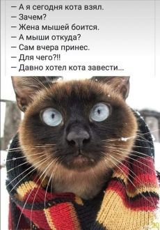 Прячемся | без кота и жизнь не та! | Постила