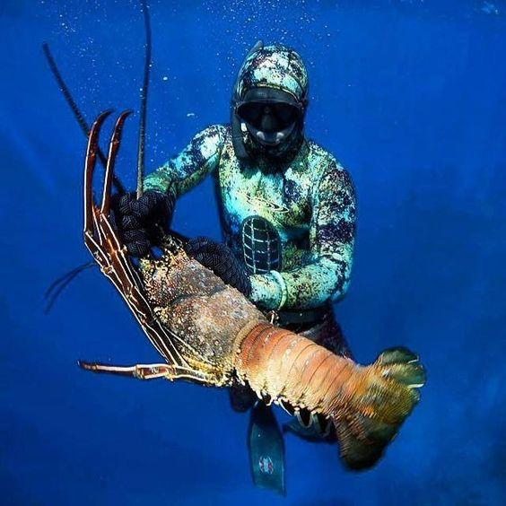 Lobster Underwater Lobster Hunt Sp...