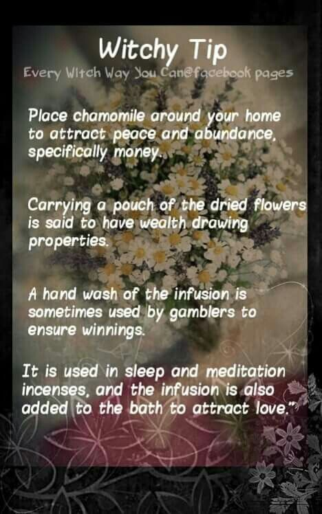 Magickal Tips for Saturday: Chamomile……Magickal Tips & Hints – Witches Of The Craft®