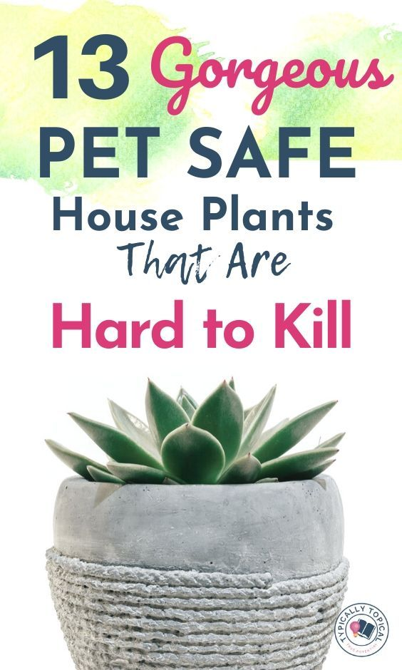 13 Pet Friendly Indoor House Plants That Look Amazing And Are Low Maintenance Typically Topical Safe House Plants Dog Safe Plants Cat Safe Plants