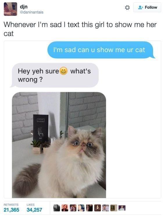 30 Hilarious Memes To Squash Your Boredom Breakmemes Com Funny Cat Memes Funny Laugh Funny Animal Memes